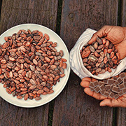 cacao venezuelano